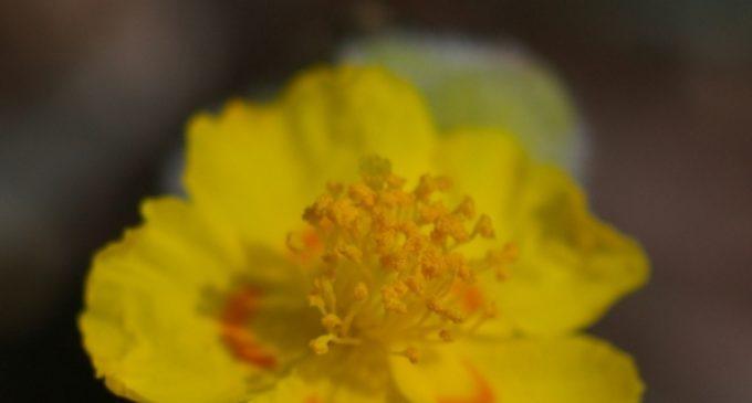 El Consell declara quatre microrreserves de flora en la província d'Alacant