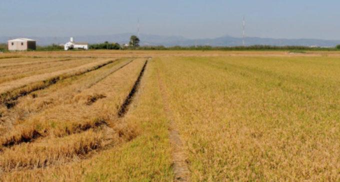 Diferentes proyectos para el aprovechamiento de la paja del arroz