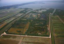 Medi Natural reintrodueix al Tancat de la Pipa del parc natural de l'Albufera l'espècie vegetal amenaçada Salsola soda