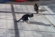 València elimina les cambres de gas i eutanàsia per a gossos de Benimàmet i les reconverteix en sales de cura i clínica veterinària per a gats