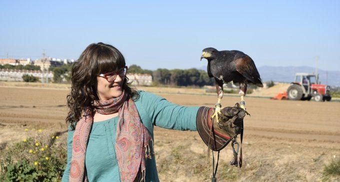 Les àguiles ja volen sobre l'horta de Burjassot per a espantar els coloms que es mengen els cultius