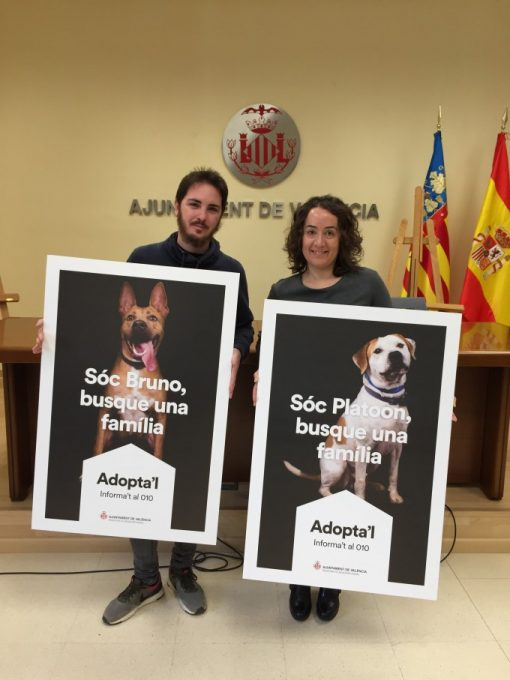 adopción responsable de animales