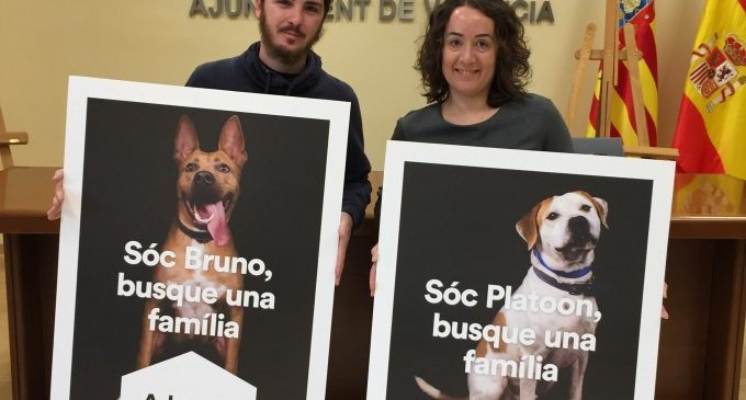 Campanya per a promoure l'adopció responsable d'animals