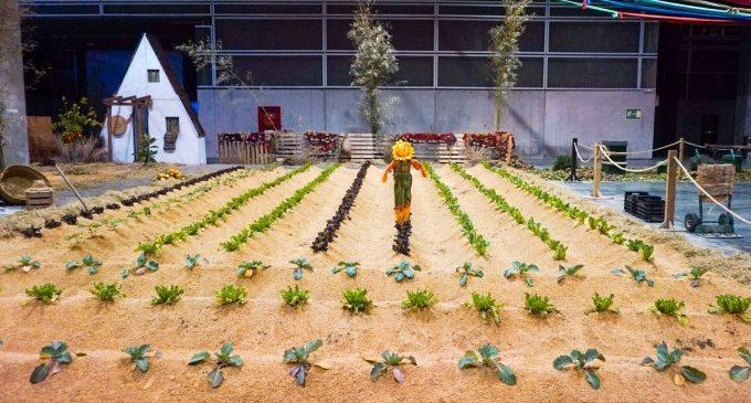 L'horta es converteix en protagonista d'Expojove