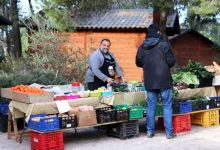 Torrent celebra el Día del Árbol con una completa programación de actividades en familia