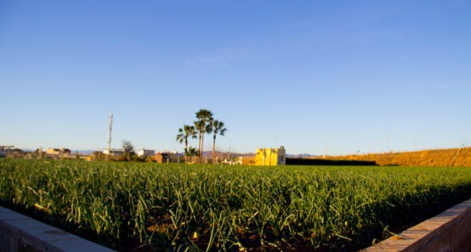 S'aprova la protecció de l'Horta de València