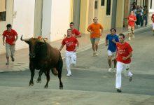 Agricultura ultima la concessió d'ajudes de quasi un milió d'euros als sectors de 'bous al carrer' i ovella guirra