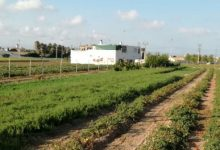 Mercats ecològics i un mapa per a adquirir productes de l'horta, l'aposta de València per l'alimentació sostenible