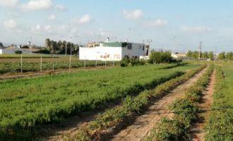 L'horta valenciana en perill per la petjada urbanística