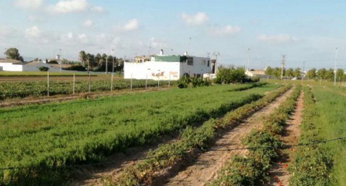 El Consell col·labora amb la Universitat Politècnica de València en la lluita contra les plagues agrícoles