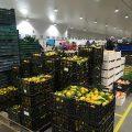 Mercavalència repartirà més de 400 quilos de mandarines en la Cavalcada de Reis