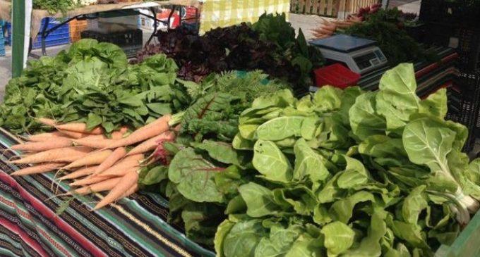 Un mercat ecològic a l'esplanada de l'Estació del Nord