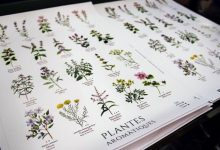Les plantes aromàtiques també tenen veu en valencià