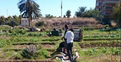 Els horts urbans de Benimaclet, pulmons verds per al barri