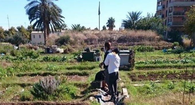 El PAI de Benimaclet: una nova amenaça per a l'horta valenciana