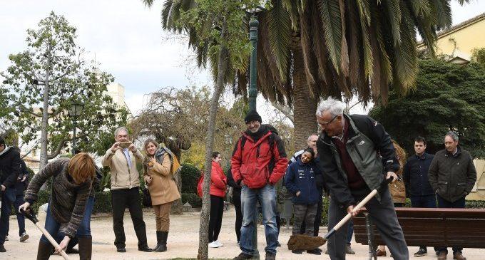 Cinc rutes per a descobrir València a través dels arbres més emblemàtics