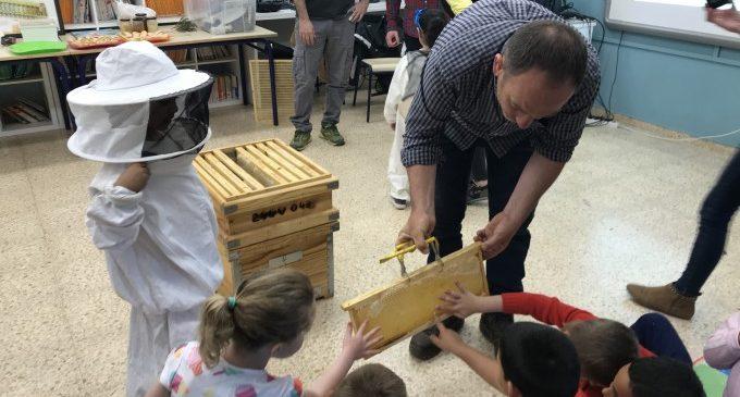Comencen els tallers 'Les abelles van a escola'