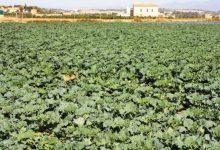S'aprofita l'aigua de les obres del carrer Antonio Ferrandis per al reg agrícola