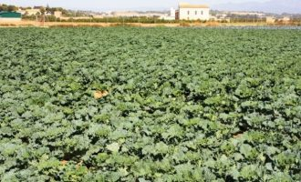 Se aprovecha el agua de las obras de la calle Antonio Ferrandis para el riego agrícola