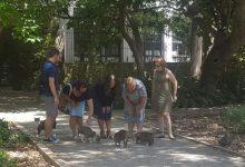 Prop de 900 felins ja han sigut esterilitzats a València