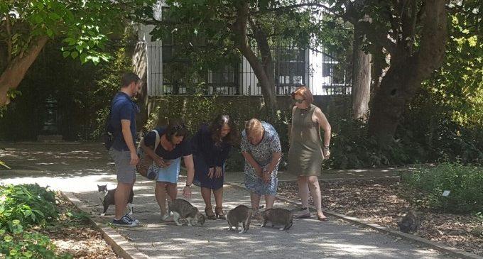 València y sus colonias felinas, cada día más saludables