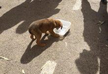 Salven la vida a un cadell tancat durant hores en un cotxe a València