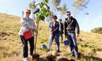 El Puig inicia la reforestación de la montaña de la Patà