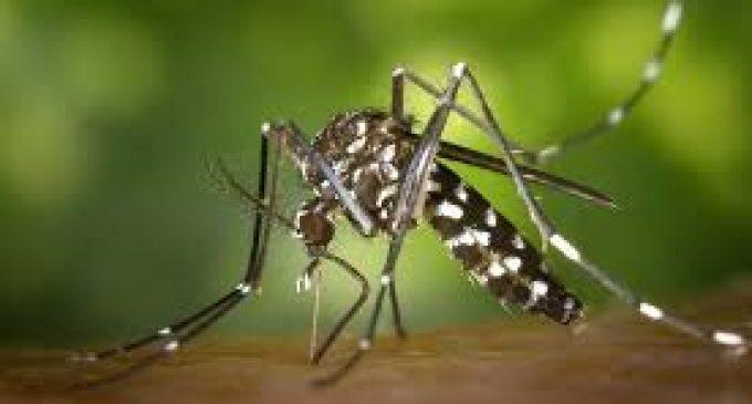 Arranca la campaña de prevención contra el mosquito tigre