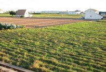 Els productes agroalimentaris sostenen de nou a les exportacions valencianes en un context de descens generalitzat