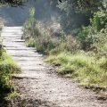 La Albufera tendrá una iluminación segura para peatones y respetuosa con el medio ambiente