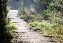 Sis itineraris per a recórrer la Devesa-Albufera