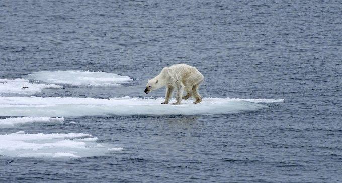Exposició fotogràfica sobre el canvi climàtic a Las Naves
