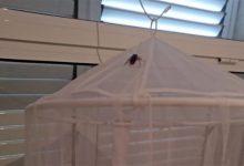L'Arnau de Vilanova-Llíria assegura que la plaga de paneroles a L'Eliana no solament afecta a l'ambulatori