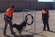 Ensinistren gossos per a detectar càncer de pròstata a través de mostres urinàries