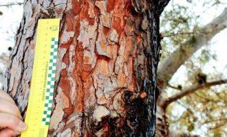 L'origen de l'incendi de Llutxent va ser la caiguda d'un raig sobre un arbre en la matinada del dilluns