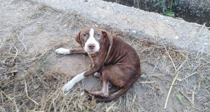 Un gos fa companyia durant tota la nit a un ancià amb alzheimer desaparegut a Borriana