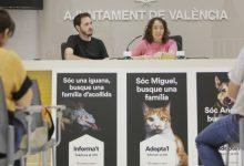 Nova campanya d'Adopta'l per a fomentar l'acollida d'animals
