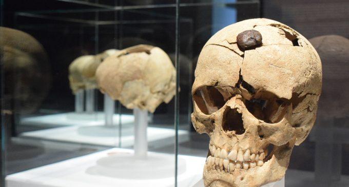 """El Museu de Prehistòria de València acull una conferència sobre el ritual dels """"Caps tallats"""" com a símbol de poder"""