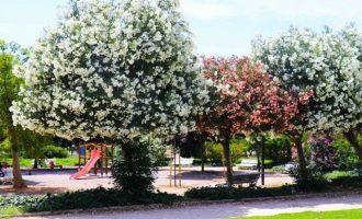Torrent, premiada por la gestión sostenible de sus espacios verdes y la educación ambiental
