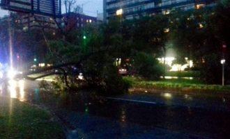 El temporal tumba un árbol en la avenida Blasco Ibáñez de València