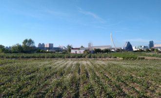 """Aprobado el Plan de Acción de la Huerta de València: """"Nuestros campos ya no serán un solar a la espera de ser edificado"""""""