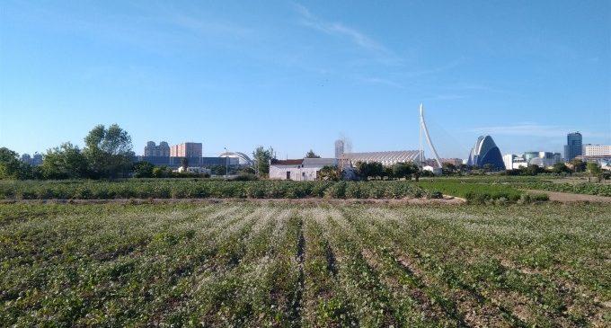 """Aprovat el Pla d'Acció de l'Horta de València: """"Els nostres camps ja no seran un solar a l'espera de ser edificat"""""""