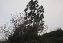 La Comunitat Valenciana está este lunes en alerta por viento que puede alcanzar rachas de 100 km/h