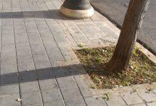 Comienzan los trabajo de limpieza de alcorques en el barrio de Morvedre