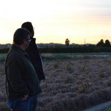 Arriba el Projecte Mussols per a la preservació d'òlibes a l'horta de Meliana