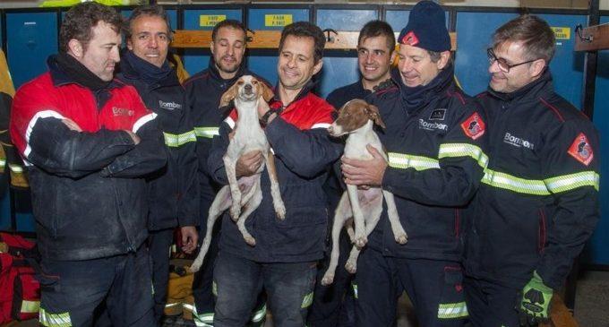 Bombers rescaten quatre gossos atrapats en una canonada a Mutxamel