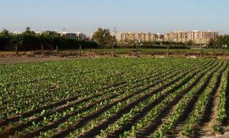 Xirivella consigue la protección íntegra de la huerta del municipio