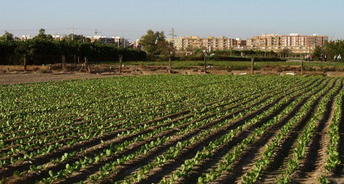 La transformació de l'horta valenciana: de l'oblit a la seua dignificació