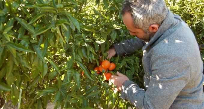 Les Corts crearan una comissió d'estudi sobre el sector citrícola valencià