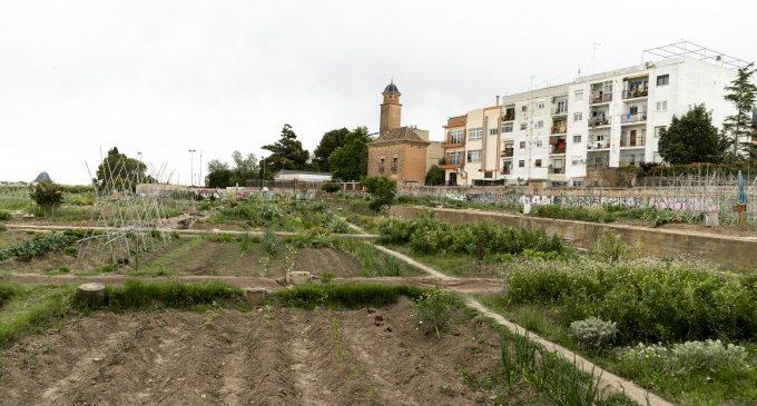 L'Ajuntament de Godella demana al veïnat ajuda per a previndre les plagues de panderoles